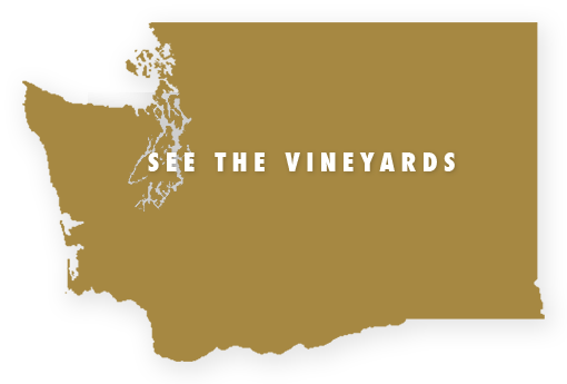 See the Vineyards
